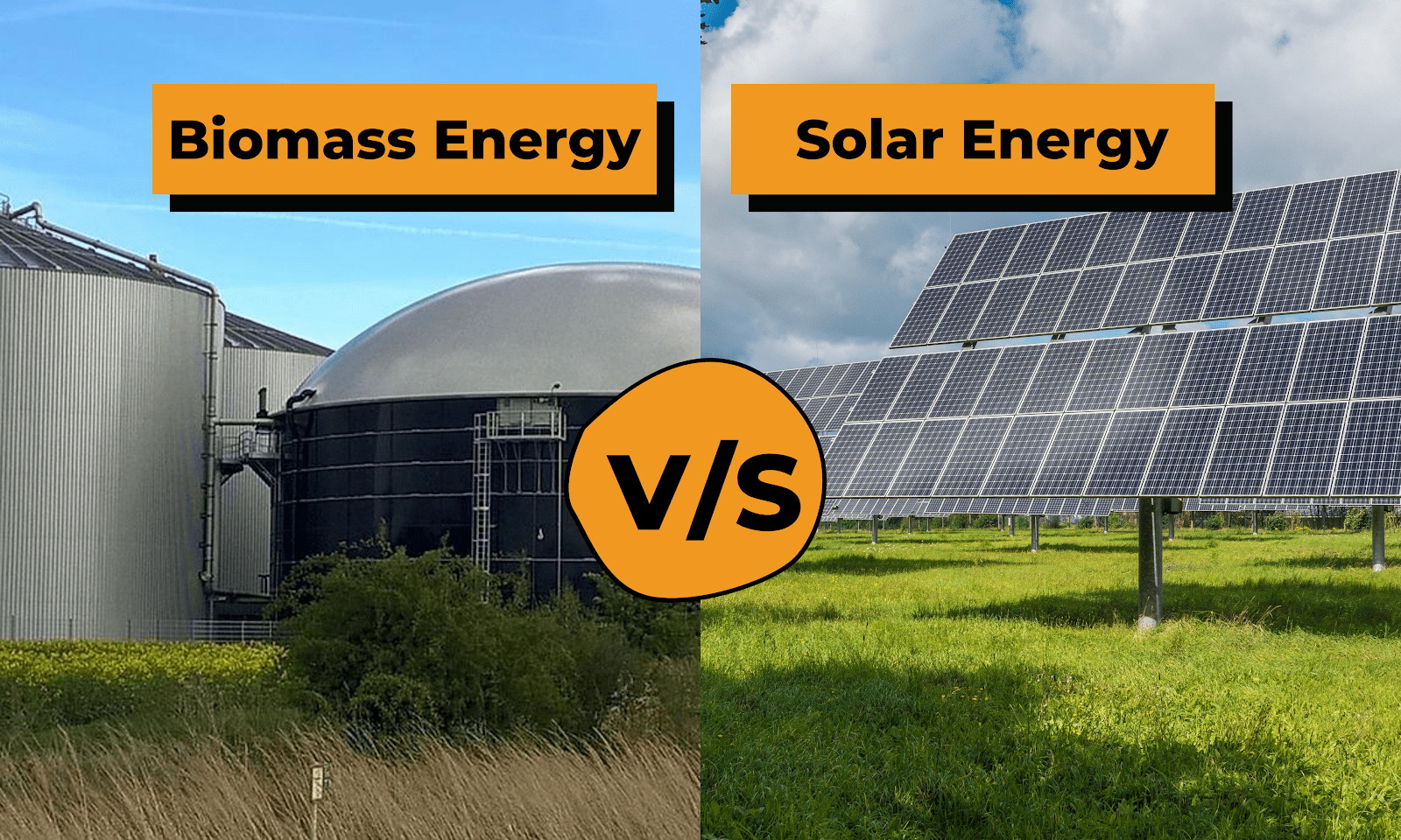 Biomass Vs Solar Energy: Which one is better?